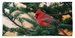 Cardinal In Balsam Beach Towel by Susan Capuano