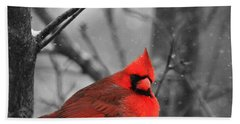 Cardinal In Snow Beach Towel by Dan Sproul