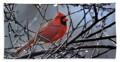 Cardinal In The Rain   Beach Sheet by Nava Thompson