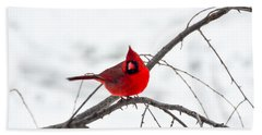 Cardinal On A Branch  Beach Sheet