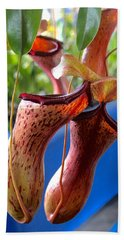 Carnivorous Pitcher Plants Beach Sheet by Venetia Featherstone-Witty
