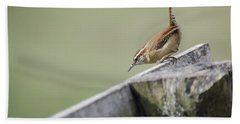 Carolina Wren Two Beach Towel