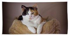 Cat Portrait Beach Sheet