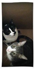 Tabby Cat Kitten Photography Pets  Beach Towel