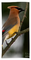Cedar Wax Wing II Beach Towel by Roger Becker