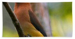 Cedar Wax Wing Beach Towel by Roger Becker