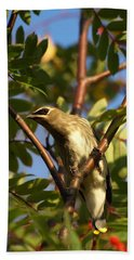 Beach Towel featuring the photograph Cedar Waxwing by James Peterson