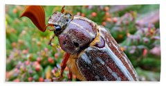 Chafer Beetle On Medusa Succulent 2 Beach Towel