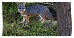 Channel Island Fox Beach Towel by David Millenheft
