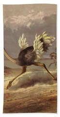 Chasing The Ostrich Beach Towel by English School