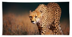Cheetah Approaching From The Front Beach Towel by Johan Swanepoel