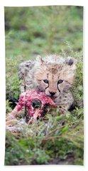 Cheetah Cub Acinonyx Jubatus Eating Beach Towel