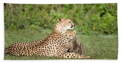 Cheetah Cub Acinonyx Jubatus Playing Beach Towel