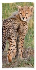 Cheetah Cub Looking Your Way Beach Towel by Tom Wurl