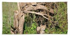 Cheetah Cubs Acinonyx Jubatus Climbing Beach Towel