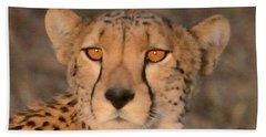 Cheetah Gaze At Sunset Beach Towel by Tom Wurl