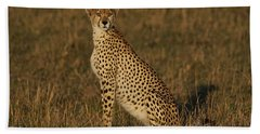 Cheetah On Savanna Masai Mara Kenya Beach Towel by Hiroya Minakuchi