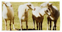 Beach Towel featuring the photograph Cheviot Sheep by Kathy Barney