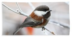 Chickadee In Winter Beach Towel by Peggy Collins