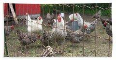 Chicken Coop. Beach Sheet