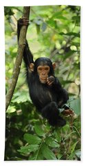 Chimpanzee Baby On Liana Gombe Stream Beach Towel by Thomas Marent