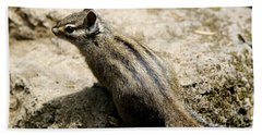 Beach Towel featuring the photograph Chipmunk On A Rock by Belinda Greb