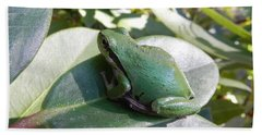 Chorus Frog On A Rhodo Beach Towel by Cheryl Hoyle