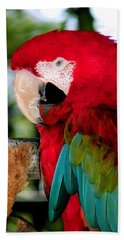 Chowtime Beach Towel by Karen Wiles