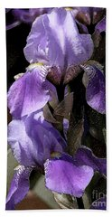 Chris' Garden - Iris 4 Beach Towel by Stuart Turnbull