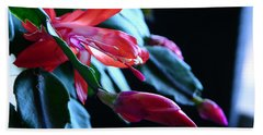 Christmas Cactus In Bloom Beach Sheet