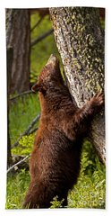 Beach Towel featuring the photograph Cinnamon Boar Black Bear by J L Woody Wooden