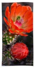 Claret Cup Cactus Beach Sheet by Deb Halloran