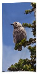 Clark's Nutcracker In A Fir Tree Beach Sheet