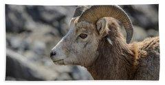 Close Big Horn Sheep  Beach Towel