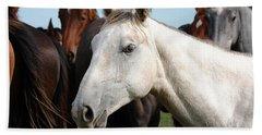Close-up Herd Of Horses. Beach Sheet