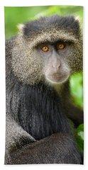 Close-up Of A Blue Monkey Cercopithecus Beach Towel