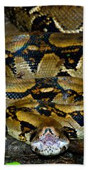 Close-up Of A Boa Constrictor, Arenal Beach Towel by Panoramic Images