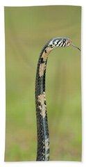 Close-up Of A Forest Cobra Naja Beach Towel
