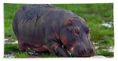 Close-up Of A Hippopotamus, Lake Beach Towel by Panoramic Images