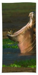Close-up Of A Hippopotamus Yawning Beach Towel by Panoramic Images