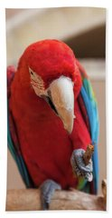 Close-up Of A Scarlet Macaw, Yazd Beach Towel