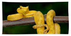 Close-up Of An Eyelash Viper Beach Sheet by Panoramic Images