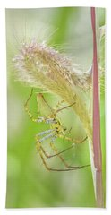 Close-up Of Green Lynx Spider Peucetia Beach Towel