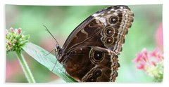 Closed Blue Morpho Beach Towel by Denyse Duhaime