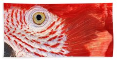 Closeup Of A Scarlet Macaw Beach Towel
