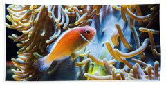 Anemonefish Beach Towels
