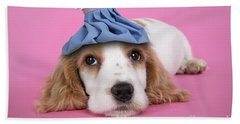 Cocker Spaniel With Ice Pack Beach Towel