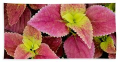 Coleus Colorfulius Beach Towel
