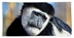 Beach Towel featuring the photograph Colobus Contemplation by Deena Stoddard