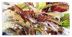 Colorful - Croton - Plant Beach Sheet by D Hackett